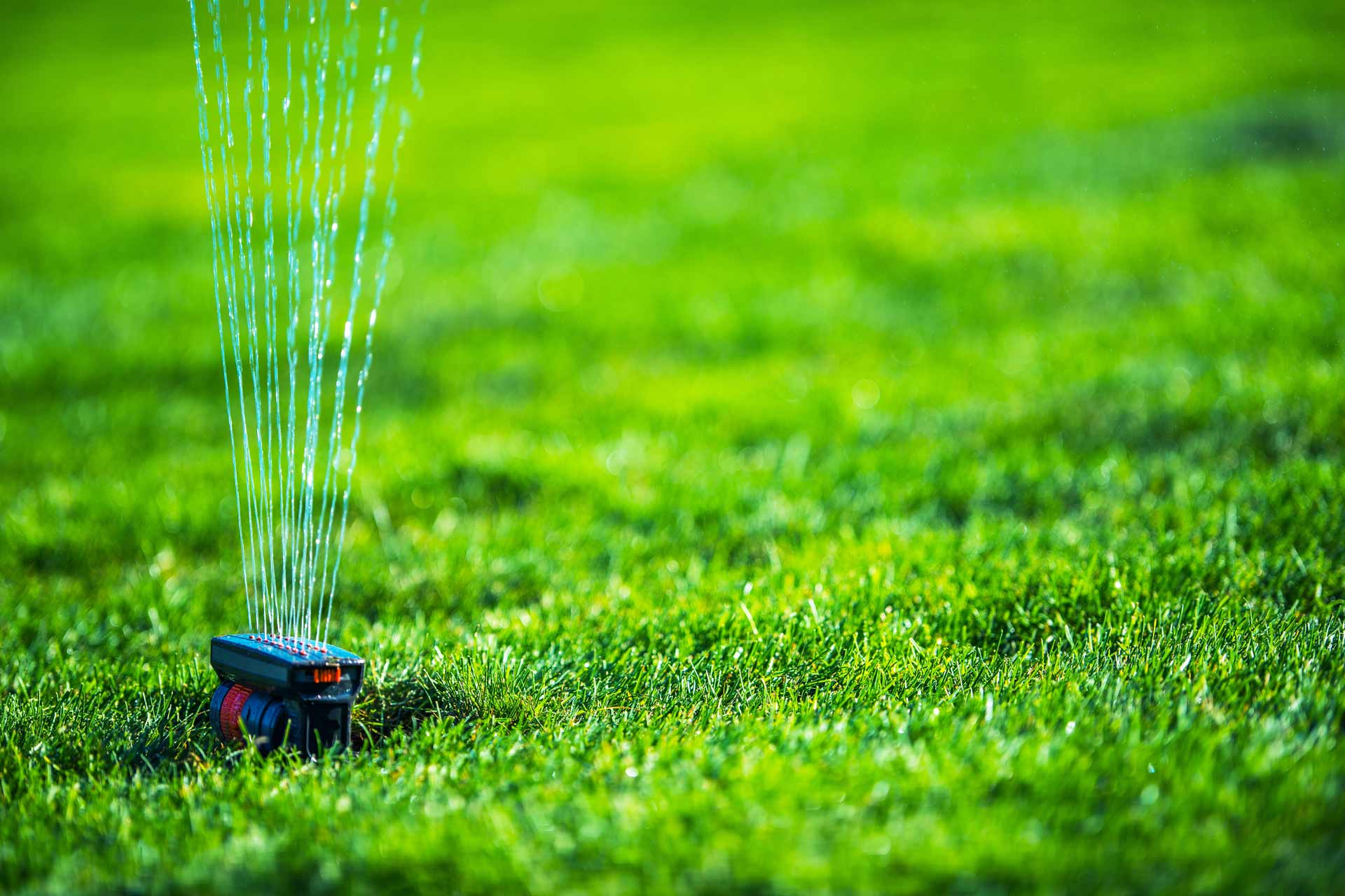 5 Ways to Save Water When Watering Your Lawn