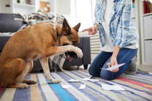 How dog daycare improves dog behaviour and socialization